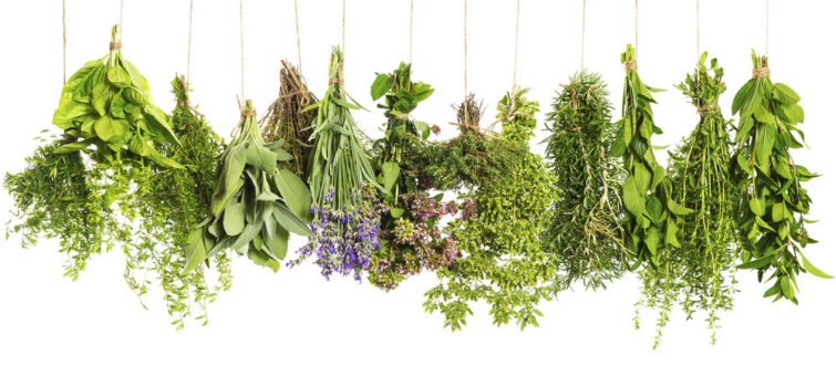 bylinky a zdraví