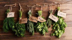 bylinky druhy