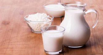 výroba mléka