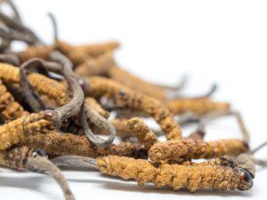 Cordyceps-Housenice cinska