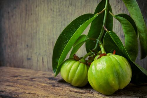 garcinia cambogia rostlina a plody