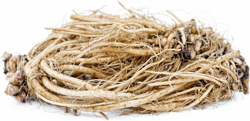 kořen čekanky - pozitivní vliv na zdraví