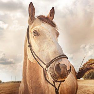 Bílý kůň z instagramu Inca Collagen