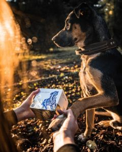 Pes s balením Inca collagenu